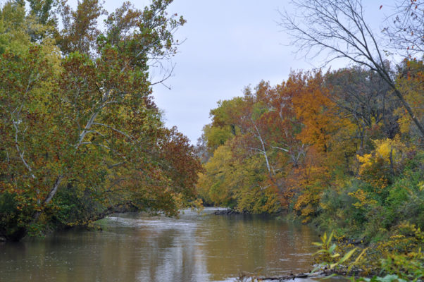 Middle Fork River in Fall