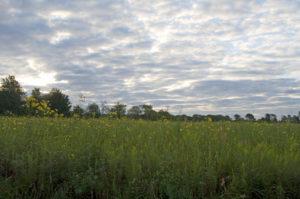Forest Glen Prairie